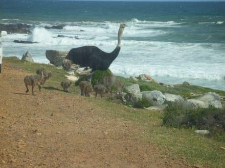 Familie Straus - Kap Agulhas