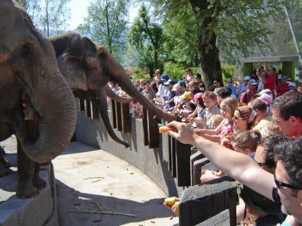 Elefantenfütterung - Knies Kinderzoo