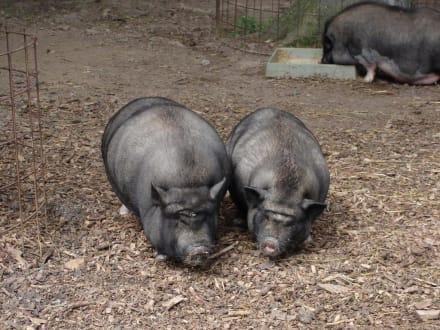 Sind das etwa Zwillinge? - Tierpark Bretten
