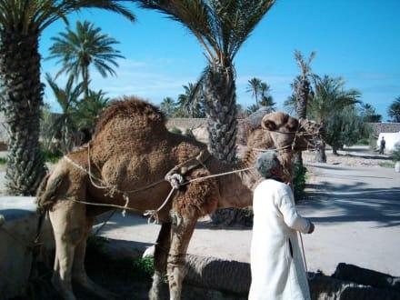 Vorführung mit Kamel in Djerba Explore Parc - Djerba Explore Parc