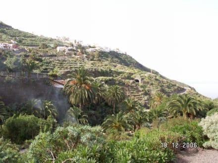 Der botanische Garten - Parque del Drago