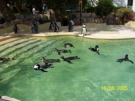 Sonstige Tiere ... - Marineland