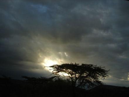 Abendstimmung in der Masai Mara - Masai Mara Safari
