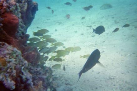 Schnorcheln - Kanutour Isla Cozumel
