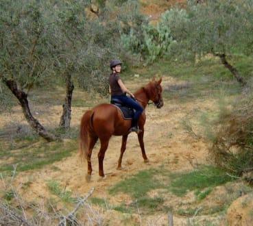 Zwischen Olivenbäumen - Ranch Mabrouka