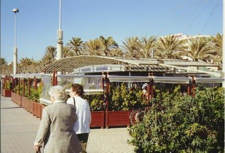 Playa de Palma/ Mallorca - Ballermann 6