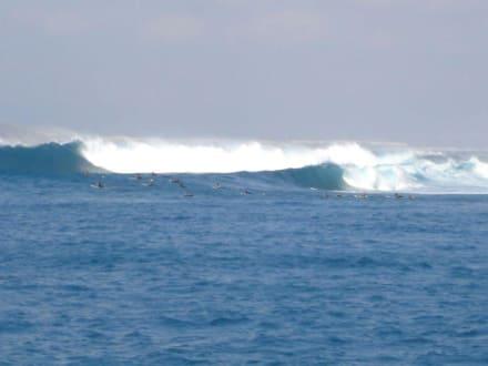 Surfer vor Lobos - Felsinsel Lobos