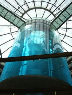 Auqa Dom - Aufzug - Sea Life Center & Aquadome