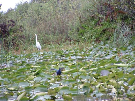 Natur pur - Everglades National Park