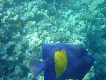 Das Meer - Schnorcheln Hurghada