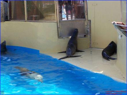 Seelöwengehege - Marineland