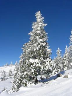 Baum - Skigebiet Hochkar