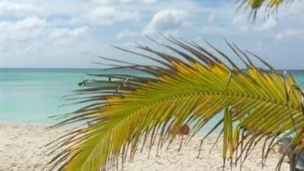 Strand/Küste/Hafen - Isla Saona