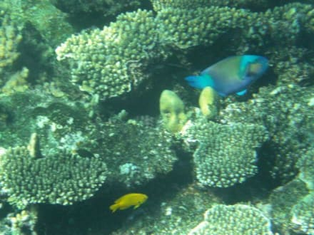 Unterwasser Welt - Schnorcheln El Quseir