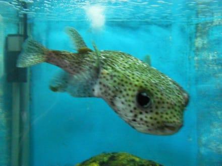 Fische bild aquarium in el gouna for Fische aquarium