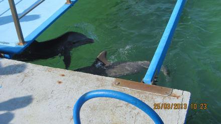 Eingang Meersbecken - Delphinarium Playa Esmeralda