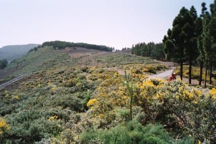 Landschaft bei Pinos de Galdar - Gran Canaria - Bergwelt