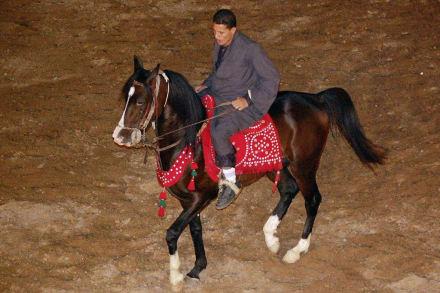 Tanzendes Pferd - Alf Leila Wa Leila