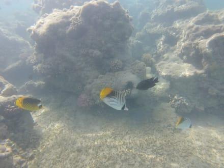 Schnorcheln Hurghada - Schnorcheln Hurghada