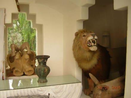 Präparierte Tiere - Haus von Dali in Port Lligat