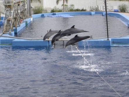 Delphinshow - Aquarium / Oceanongrafic