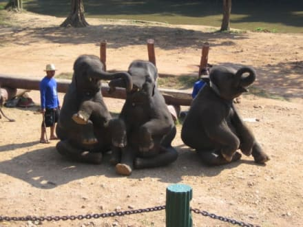 Sind wir nicht süß? - Maeping Elephant Camp