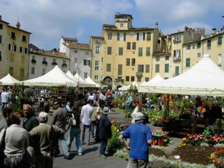 Markt in Lucca - Altstadt Lucca