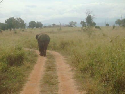 Uda-Walawe-Nationalpark - Nationalpark Udawalawe