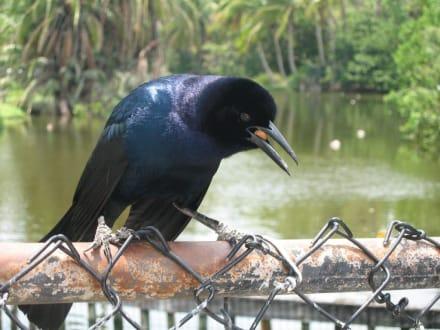 Vogelfütterung  - Naples Zoo