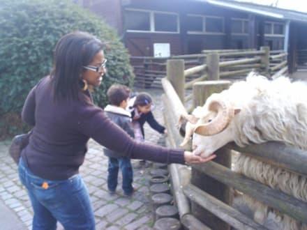 Du wärst doch was für mein Hammelfest! - Zoo Karlsruhe