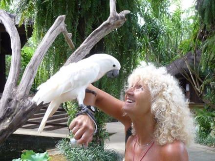 Kakadu und Touristin lachen sich an! - Bali Bird Park