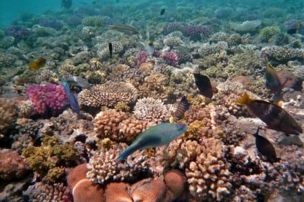 Unterwasserwelt! - Schnorcheln Makadi Bay