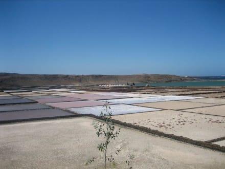 Salinen mit Schätzen (großen Muscheln) - Salinas de Janubio
