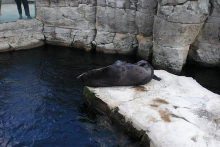 Bremerhaven Zoo - Zoo am Meer Bremerhaven