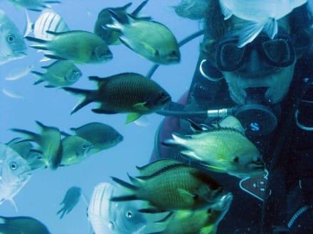 Unterwasserwelt vor Morro Jable - SubCat Tour