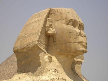 Sphinx - Sphinx von Gizeh