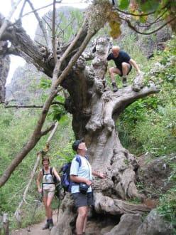 In der Höllenschlucht - Wasserfälle - Barranco del Infierno