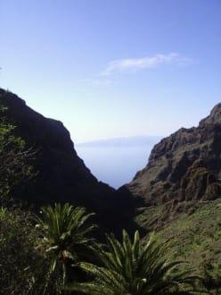 Der Blick durch die Schlucht auf La Gomera - Masca Schlucht (geschlossen)