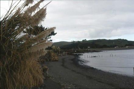 Der schwarze Strand an der Whale Bay von Raglan - Strand Raglan & the Whale Bay