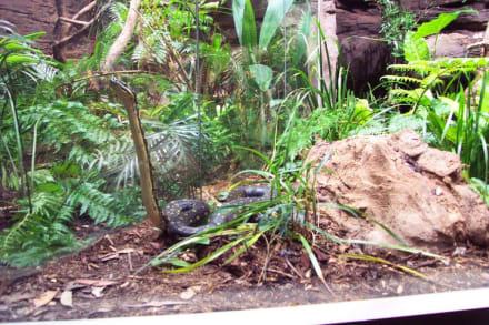 Schlange im Terrarium - Wildlife World