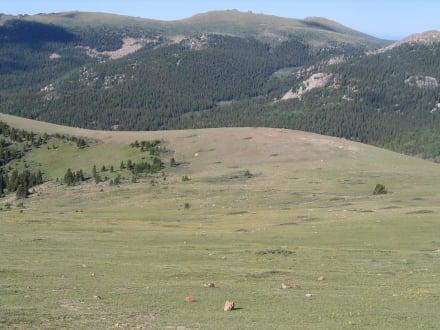 Hochplateau unterhalb des Gipfels - Pikes Peak