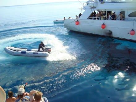 Verteilen des Oelteppiches - Delfin Tour Hurghada