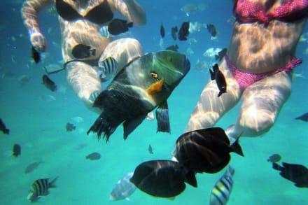 viele bunte Fische - Schnorcheln Makadi Bay