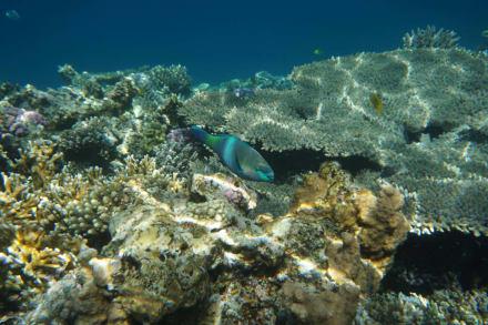 Schnorcheln am Riff - Delfinschwimmen Delfine & Meer