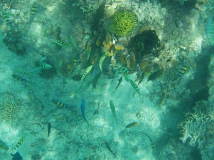 Fische - Unterwasser um Gilli Air
