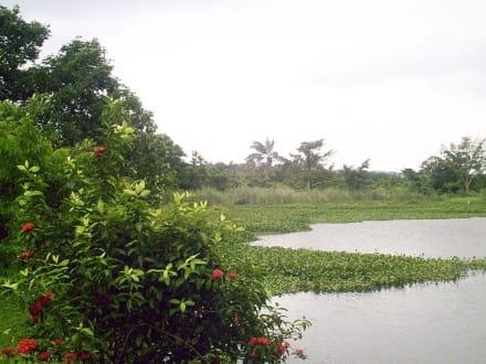 Royal Palmreserve Moorlandschaft - Royal Palm Reserve Negril
