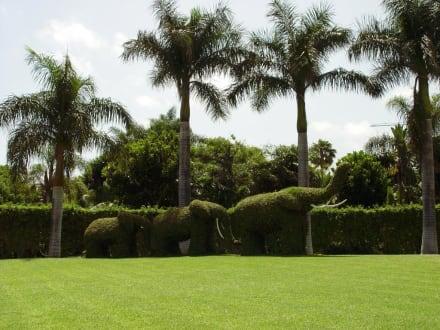 Loro Park - Pflanzen - Loro Parque