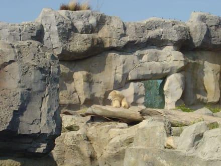 Zoo am Meer - Zoo am Meer Bremerhaven