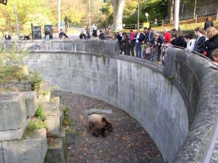Bärengraben - BärenPark Bern / Bärengraben