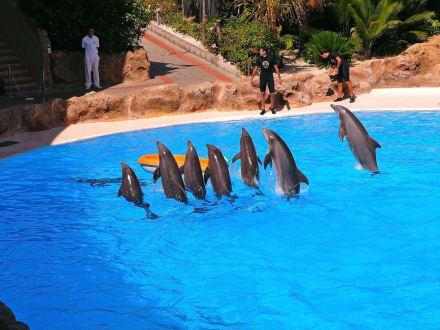 Loro - Park Delfin - Show - Loro Parque